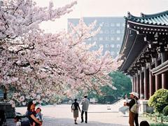 đi du học Nhật Bản tại Fukuoka