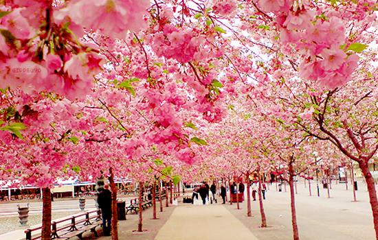Thiên nhiên tươi sắc 4 mùa tại đất nước Nhật Bản