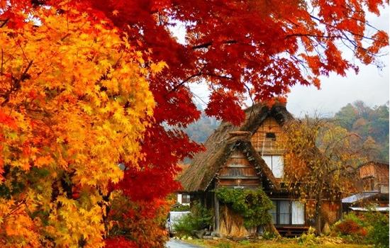 Rừng phong Nhật Bản đẹp vô cùng vào mùa thu