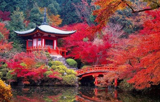 Du khách có thể chọn cố đô Kyoto để ngắm rừng phong Nhật Bản