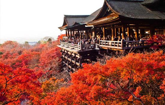 Trong dịp này, các đền chùa ở Kyoto luôn chật kín du khách