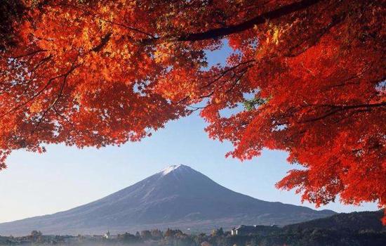 Du lịch mùa thu để xem lá đổi màu là nguồn lợi chính của du lịch Nhật Bản
