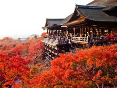 Rừng phong Nhật Bản vô cùng tuyệt đẹp vào mùa thu