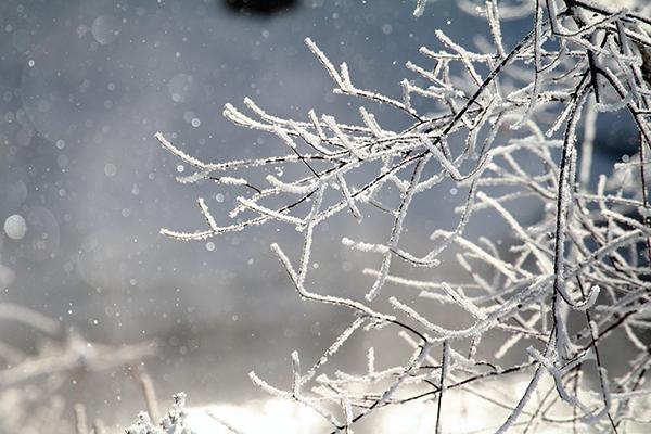 """Thời tiết lạnh giá, Nhật Bản háo hức chiêm ngưỡng """"bụi kim cương"""""""
